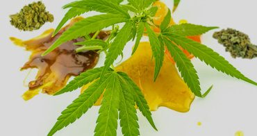 weed concentrate resin and shatter with marijuana leaf
